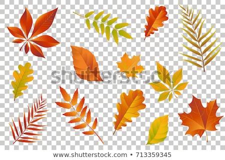 Outono ilustração colorido queda folhas castanha Foto stock © articular
