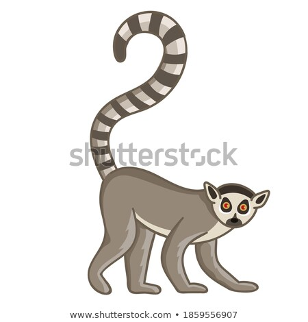 African animal, cute lemur with striped long tail icon isolated on white background, vector Stock photo © MarySan