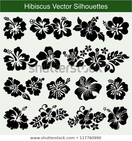 amarillo · hibisco · dos · flor · belleza · planta - foto stock © fyletto