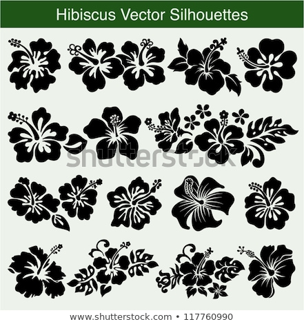 Foto stock: Hibiscus Ornaments