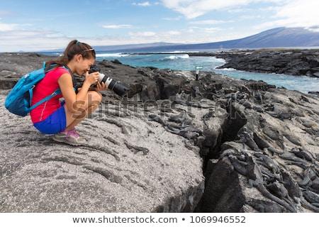 wildlife photographer and tourist on galapagos taking photo of marine iguana stock photo © maridav