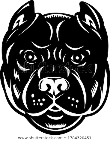American Staffordshire Bull Terrier Etching Black and White Stock photo © patrimonio