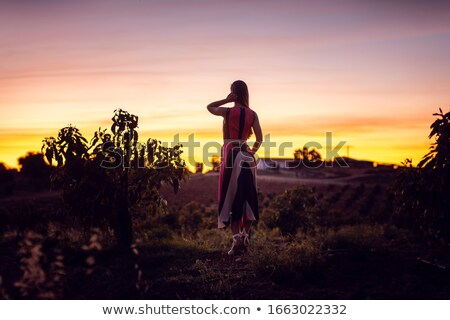 Woman watching the afterglow in an olive grove Stock photo © Kzenon
