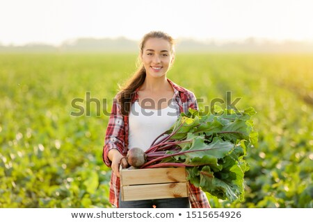 Woman Harvesting Beetroots in Field, Farming Girl Stock photo © robuart