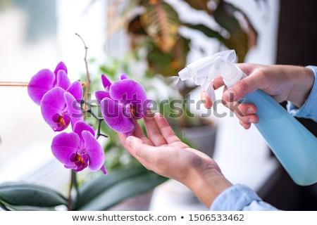 Orkide çiçek kelebek ev bahçe Stok fotoğraf © beemanja
