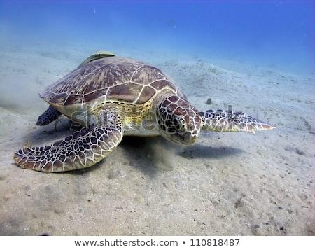 groene · schildpad · rode · zee · vis · natuur · landschap - stockfoto © stephankerkhofs