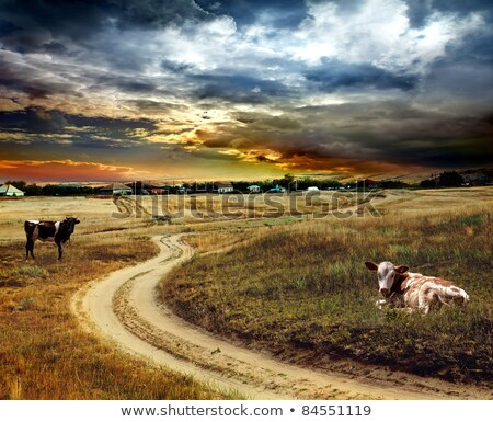 Vaches pays chemin de terre rural agriculture Photo stock © byjenjen