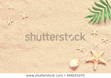 estate · conchiglie · sabbia · bianco · spiaggia · mare - foto d'archivio © AndreyKr