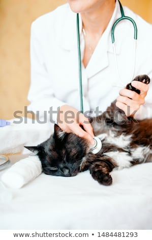 Stock foto: Veterinarian Listening A Cat While Doing Checkup At Clinic