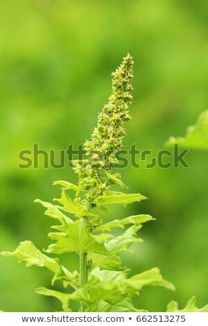 多年生植物 フィールド 日 春 ストックフォト © cynoclub