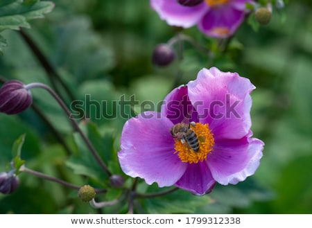 Kust bloem Californië natuur Stockfoto © emattil