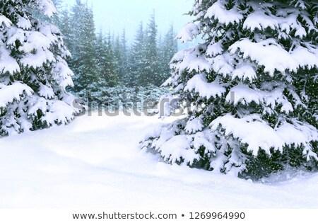 snow on fur tree stock photo © chesterf