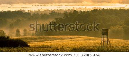 Cacciatore torre foresta foglia verde prato Foto d'archivio © digoarpi
