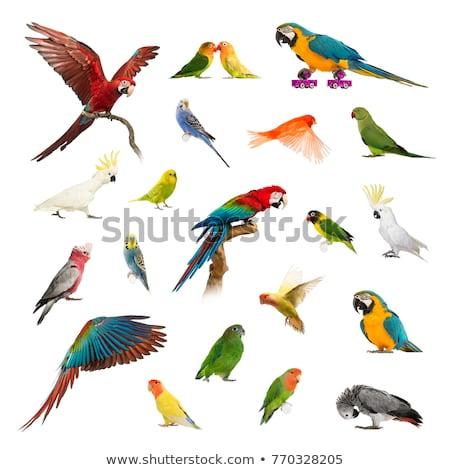 Establecer diferente animales boceto ilustraciones ratón Foto stock © perysty