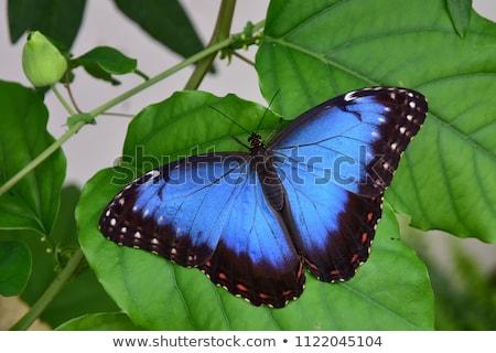 青 · 蝶 · 緑色の葉 · 翼 · 目 · デザイン - ストックフォト © haraldmuc