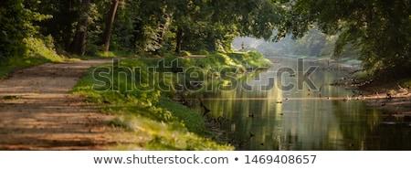 Groene landschap pad rivier zonnige bomen Stockfoto © pab_map