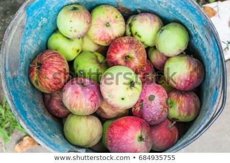 Rot appel weelderig groen gras gras Stockfoto © sarahdoow