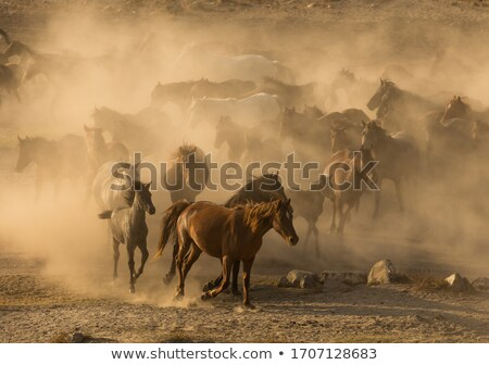 Herd of wild horses in a field Stock photo © All32