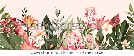 Tropical flowers border Stock photo © Irisangel