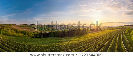 Plantation printemps alimentaire paysage feuille Photo stock © OleksandrO