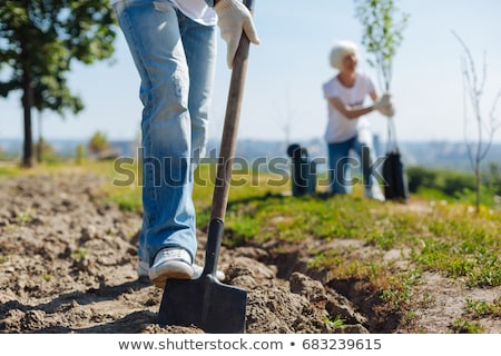 environmental activists planting a tree in the park stock photo © wavebreak_media