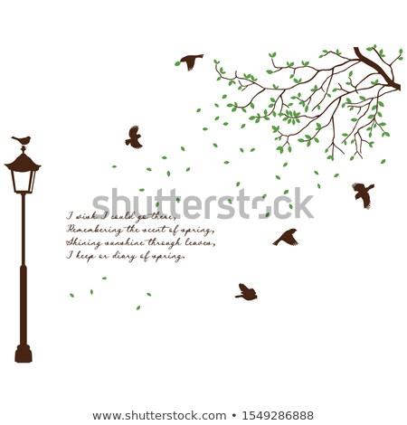 birds in street wall decal vector illustration stock photo © rizwanali3d