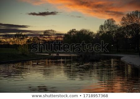 Arbre sombre ciel bleu derrière bois jardin Photo stock © Madrolly