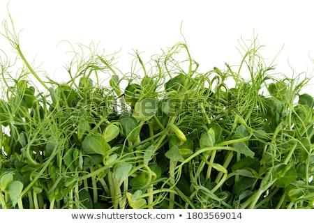 Zöldborsó közelkép kicsi étel természet nyár Stock fotó © avq