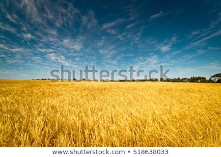 mező · fű · tökéletes · naplemente · tavasz · fa - stock fotó © tetkoren