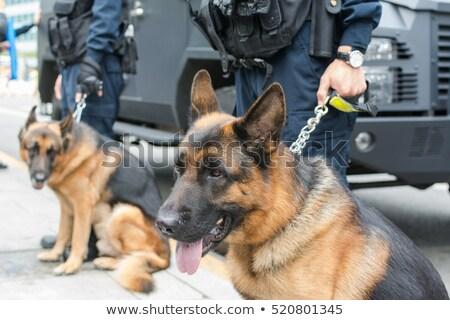 drug dog stock photo © adrenalina