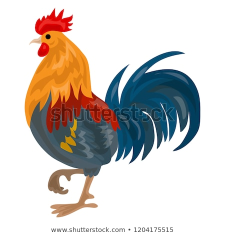 петух · важный · кирпичных · куриные · мяса · свободный - Сток-фото © Nekiy