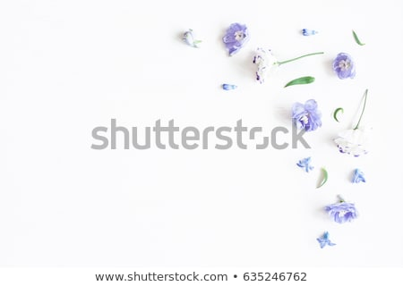 A border made of leaves and violet flowers Stock photo © bluering
