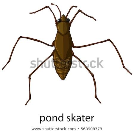 Insectos estanque patinador ilustración naturaleza fondo Foto stock © bluering