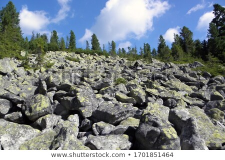 Nature mountains landscape. Rocky mountains and pine forest. Evening. Stock photo © Leo_Edition