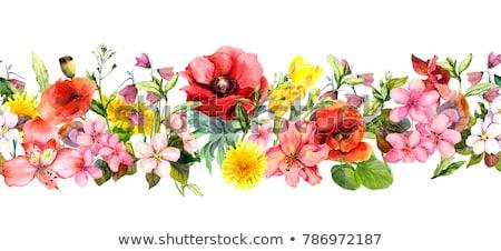 ciao · primavera · natura · erba · confine · gradiente - foto d'archivio © barbaliss
