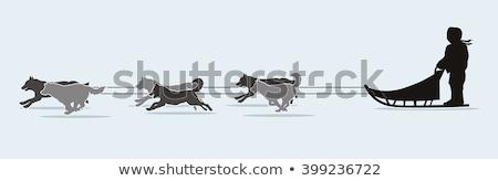 integet · kutya · aranyos · fehér · állat · díszállat - stock fotó © is2