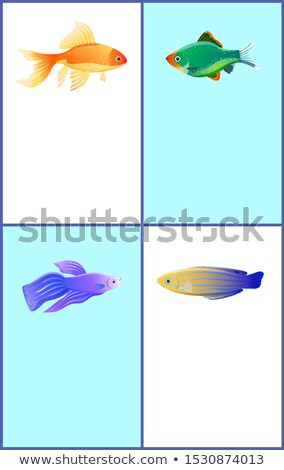 Green Tiger Barb and Blue Striped Tamarin Fishes Stock photo © robuart