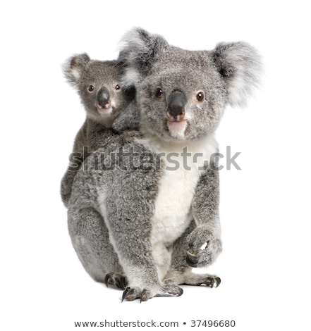 bebé · koala · Cartoon · pie · dos · piernas - foto stock © clairev
