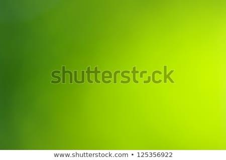 Lentille lumière bokeh vert printemps été Photo stock © romvo