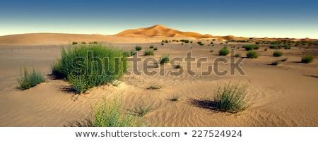 Kamelen zanderig woestijn bergen zonsondergang zon Stockfoto © Givaga