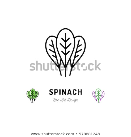 ほうれん草 葉 アイコン ベクトル 実例 ストックフォト © pikepicture