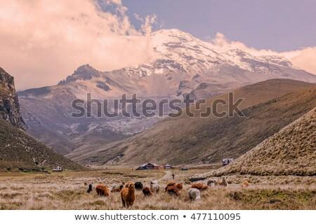 High in mountains in Ecuador is a Chimborazo cabana Stock photo © photoblueice