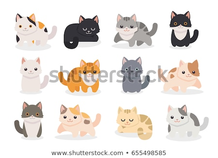 Foto stock: White Cat Set