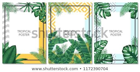 Tropikal çerçeve örnek egzotik kuş meyve Stok fotoğraf © dayzeren
