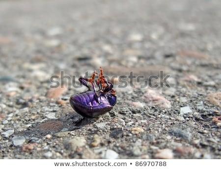 Dead Bug Supine On Pavement Photo stock © PRILL