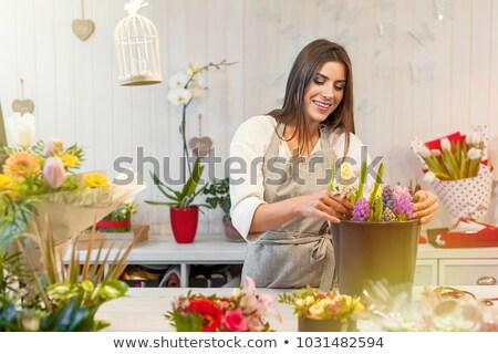 желтый · растений · белый · Daisy · цветы · теплица - Сток-фото © ivonnewierink