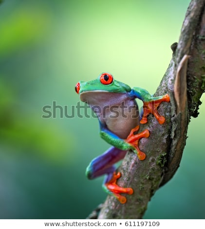 Gotowy skok żaba biały Zdjęcia stock © saje
