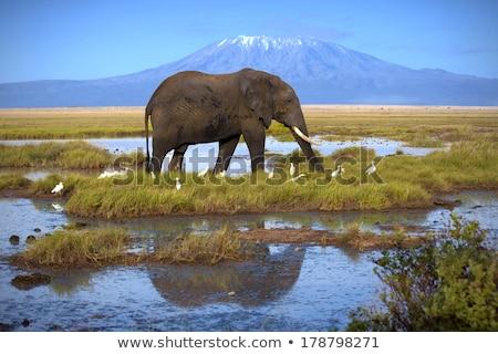elefántok · Kenya · elefánt · nyáj · park · Afrika - stock fotó © ajlber