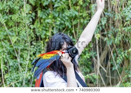 Funny papuga turystycznych fotograf odizolowany Zdjęcia stock © RAStudio