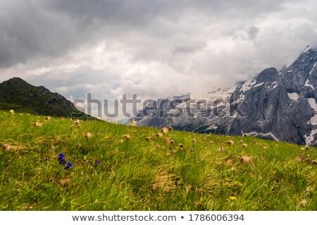 footpath in Val di Fassa Stock photo © Antonio-S